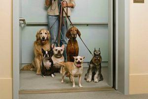 condominio-cani